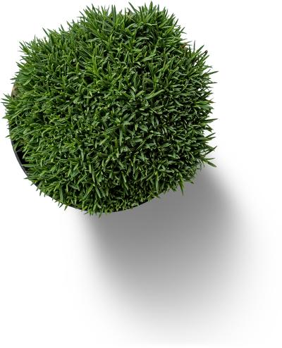 Eine grüne Pflanze von oben