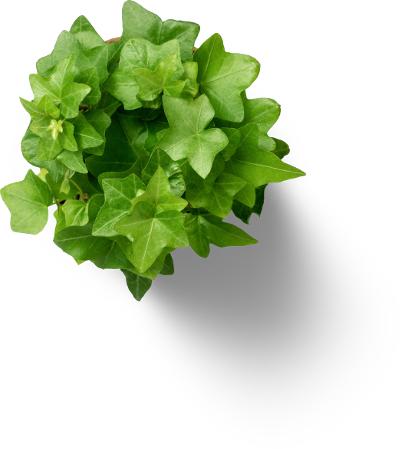Eine grüne Topfpflanze von oben